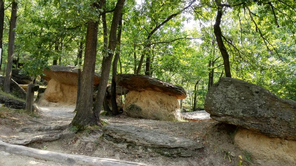 Gruppo di ciciu nel bosco