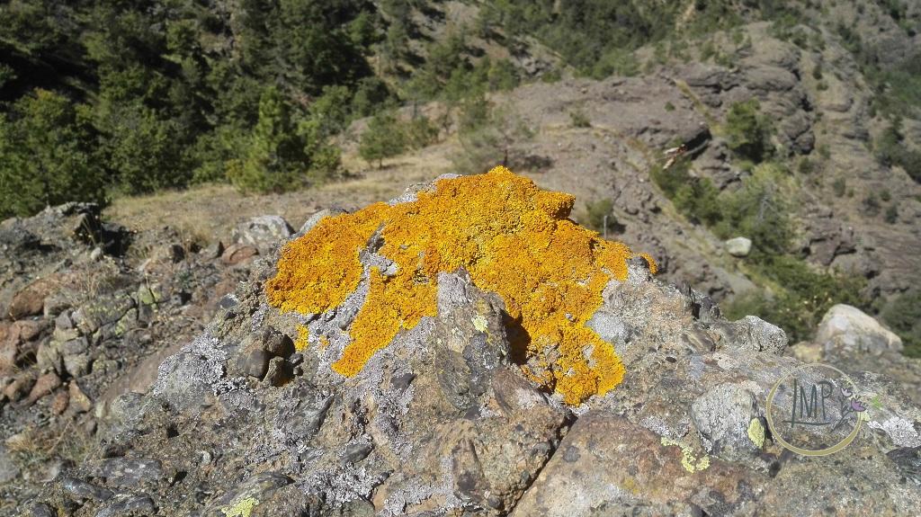 La Val Gargassa e i suoi canyon lunari Lichene