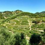 Liguria terrazzamenti a vigna
