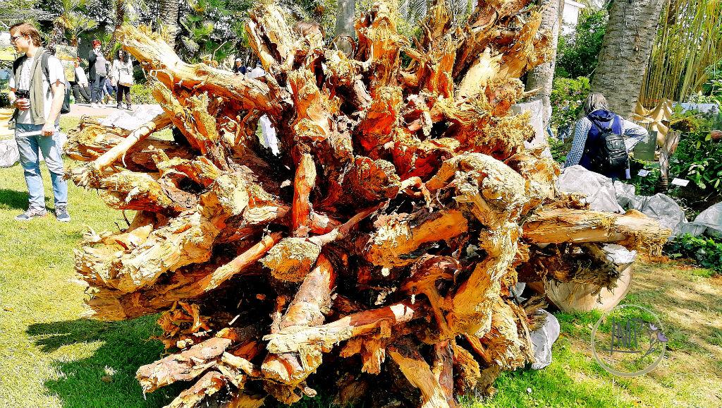 Euroflora 2018 bufera albero sradicato