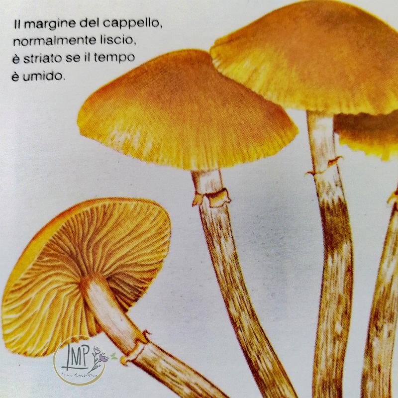 Funghi chiodini tossico