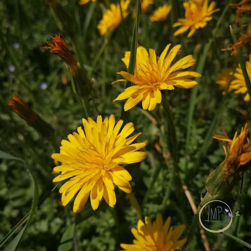 Preboggion dettaglio fiori