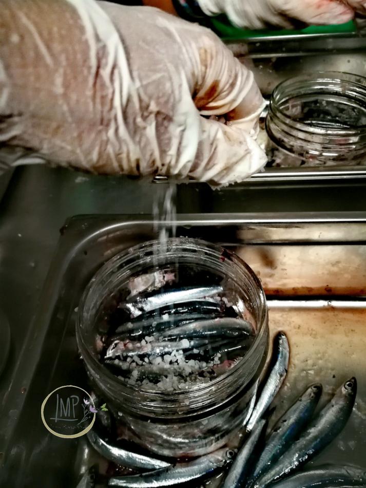 Acciughe sotto sale arbanella salagione in atto