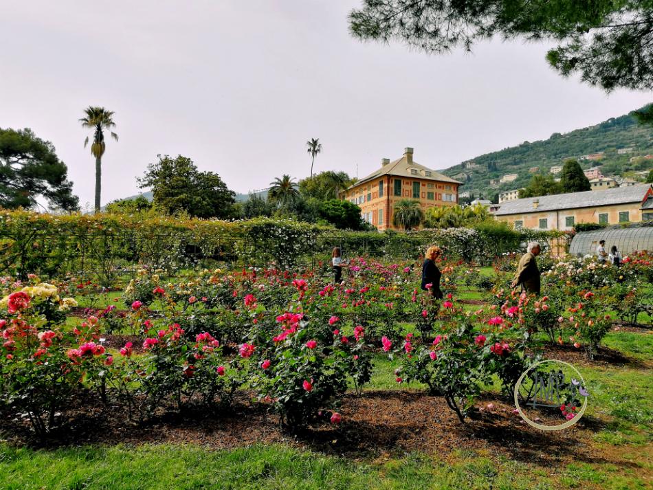 Nervi Riviera in città, Arte e Natura roseto