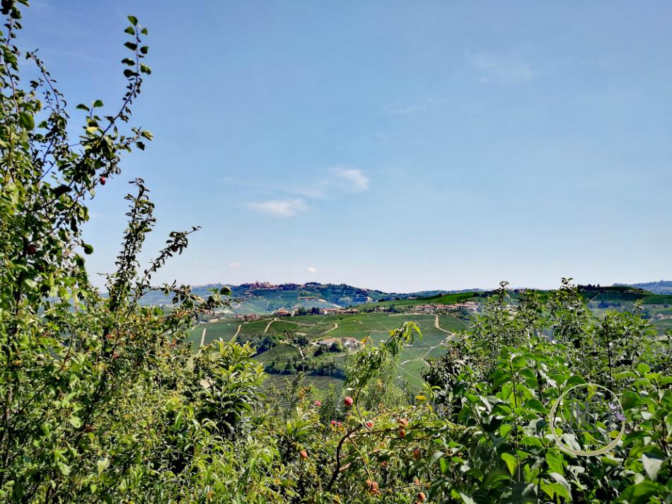 Castiglione Falletto panorama