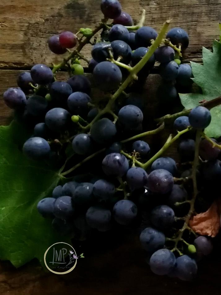 Uva fragola o uva americana