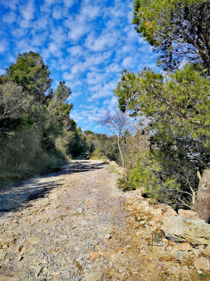 Strada Napoleonica verso Verezzi 12