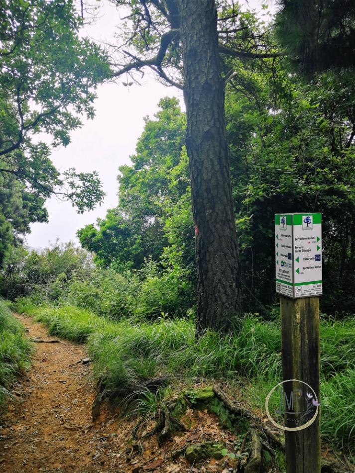 Sentiero per Semaforo Nuovo 43