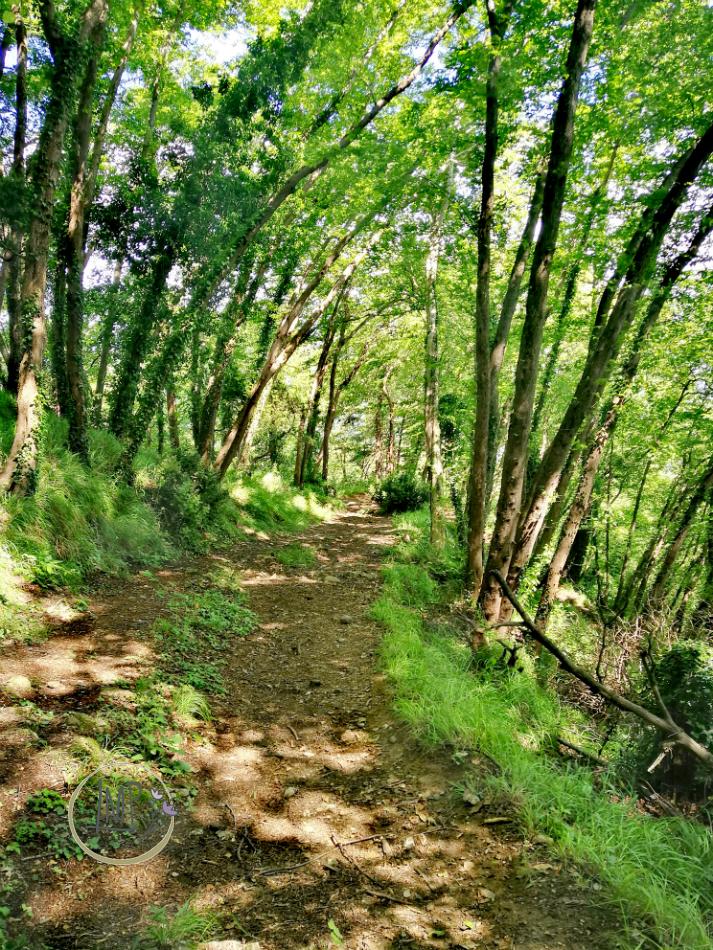 Sentiero per Semaforo Vecchio 24