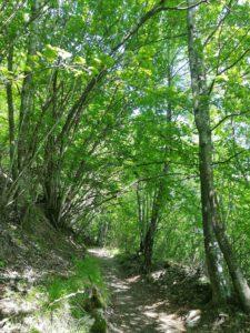 Sentiero per il Pian della Cavalla